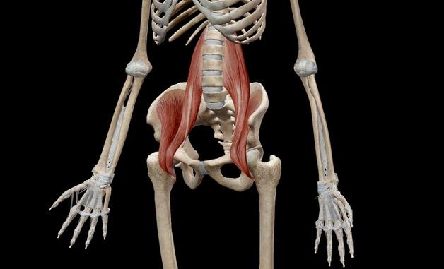 腸腰筋の走行解剖