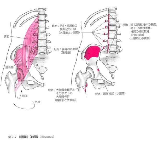腸腰筋の教科書抜粋