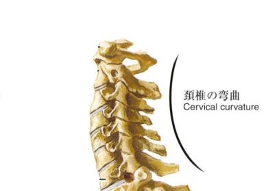 正しい頸椎アーチ