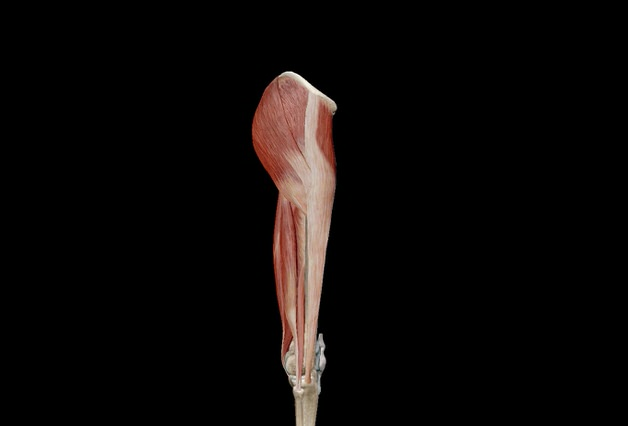 股関節を伸ばす前