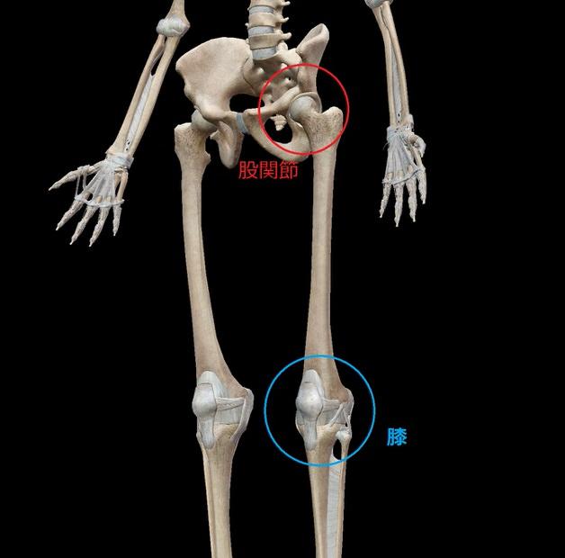 股関節と膝の場所