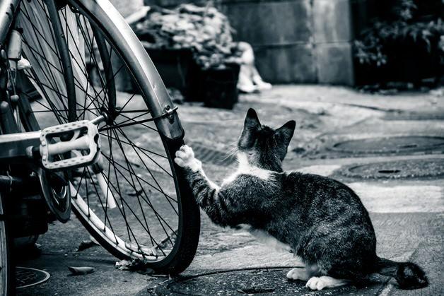 猫によるパンク