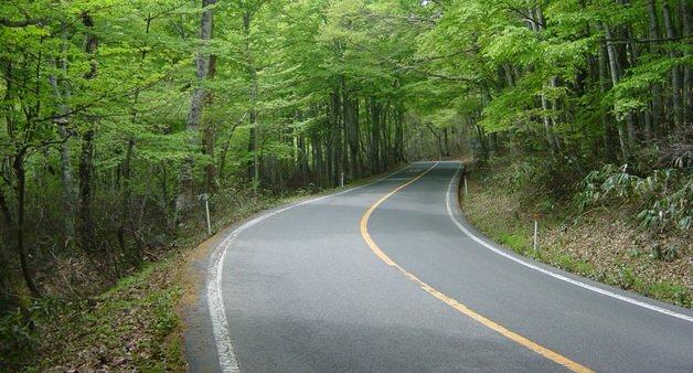 森の中の車道