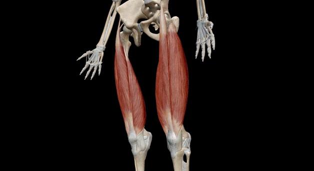 大腿四頭筋の場所